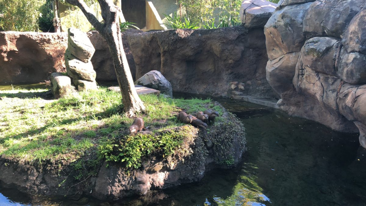 Otter Grotto
